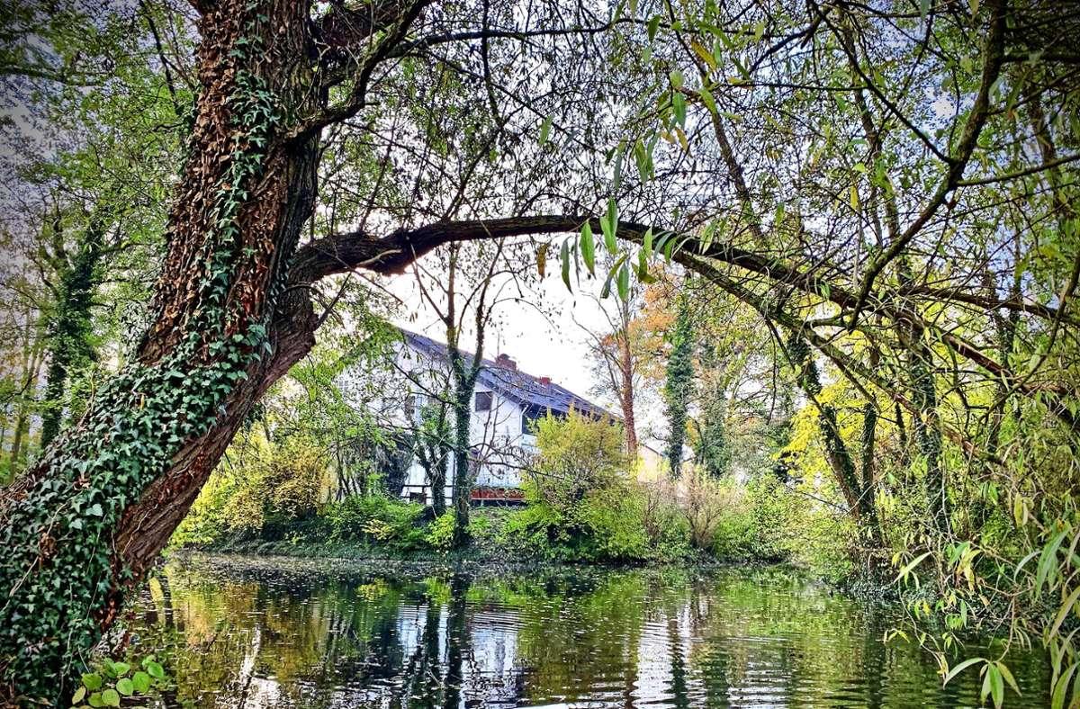 Die Idylle ist wieder zurückgekehrt am Riedsee Foto: Götz Schultheiss