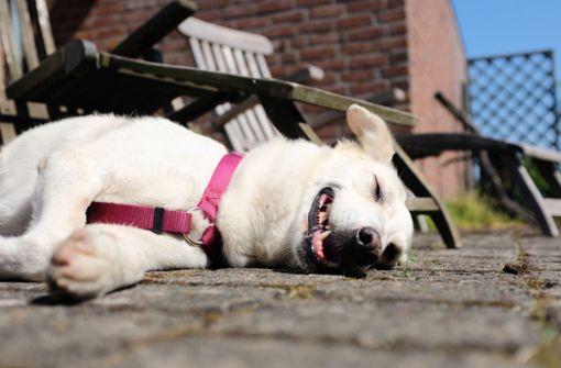 So schützen Sie Ihre Haustiere vor der Hitze