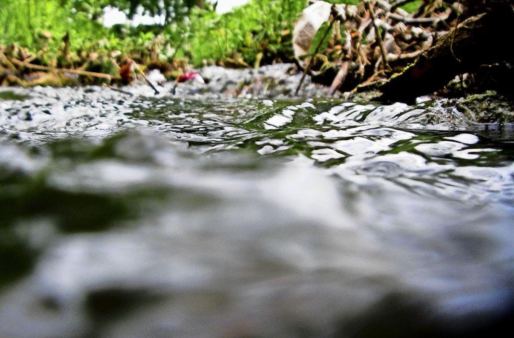 Der Hainbach soll bald durch grüne Auen fließen Foto: Horst Rudel