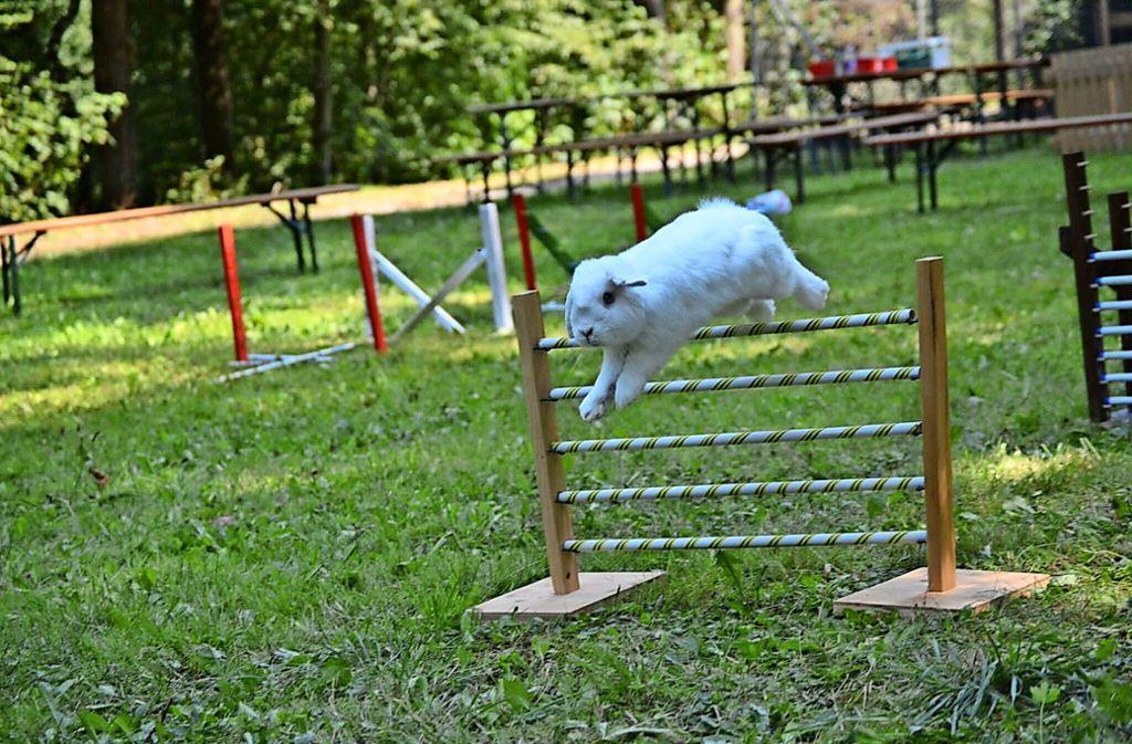 Beim Kanin-Hop müssen die Tiere einen Hindernisparcours meistern. Foto: Veranstalter