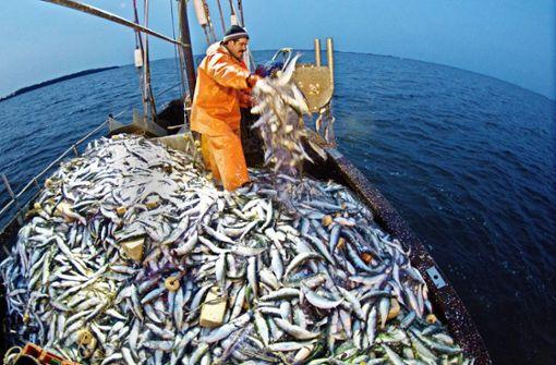 Wie fängt man Fische nachhaltig?