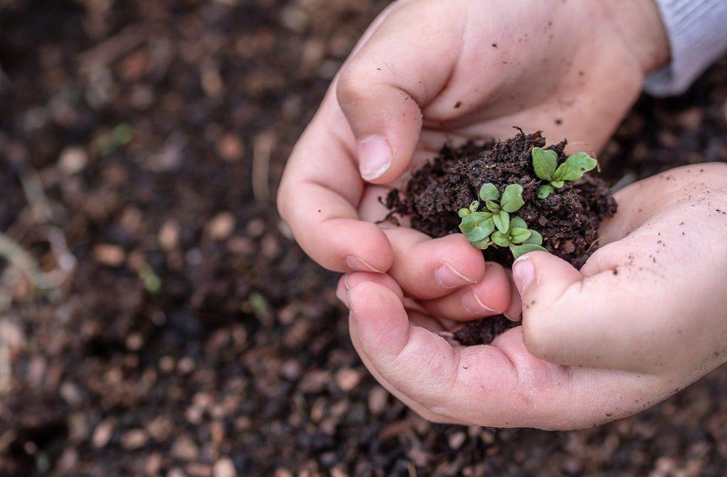 Start-ups sind oft noch zarte Pflänzchen. Das Land will einige über die Corona-Krise retten. Foto: /Pixabay