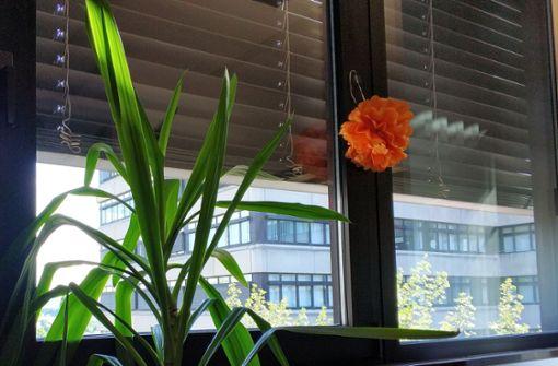 Rollladen runter: Wie viel Licht brauchen Pflanzen im Zimmer?