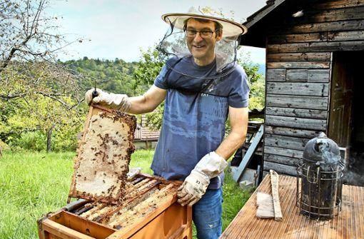 Ein katastrophales Jahr für die Bienen