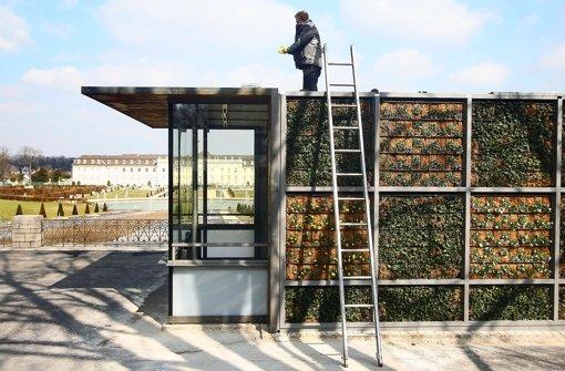 An den Wänden der neuen Kartenhäuschen wachsen Pflanzen. Foto: factum/Granville