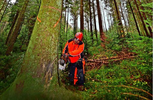 Wald versus Wirtschaft
