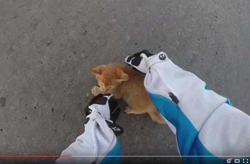 Motorrad-Fahrerin rettet Katzen-Baby