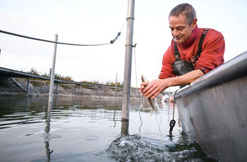 Gibt es bald keine Fischer mehr?