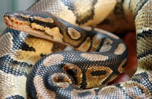 29.6.: Exotische Schlangen entdeckt