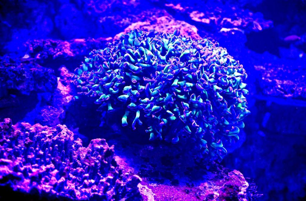 Korallen Karlsruhe
