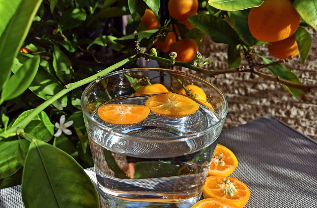 Ein Glas Wasser reicht bei der Hitze nicht, drei bis vier Liter sollten es sein. Foto: Jürgen Brand