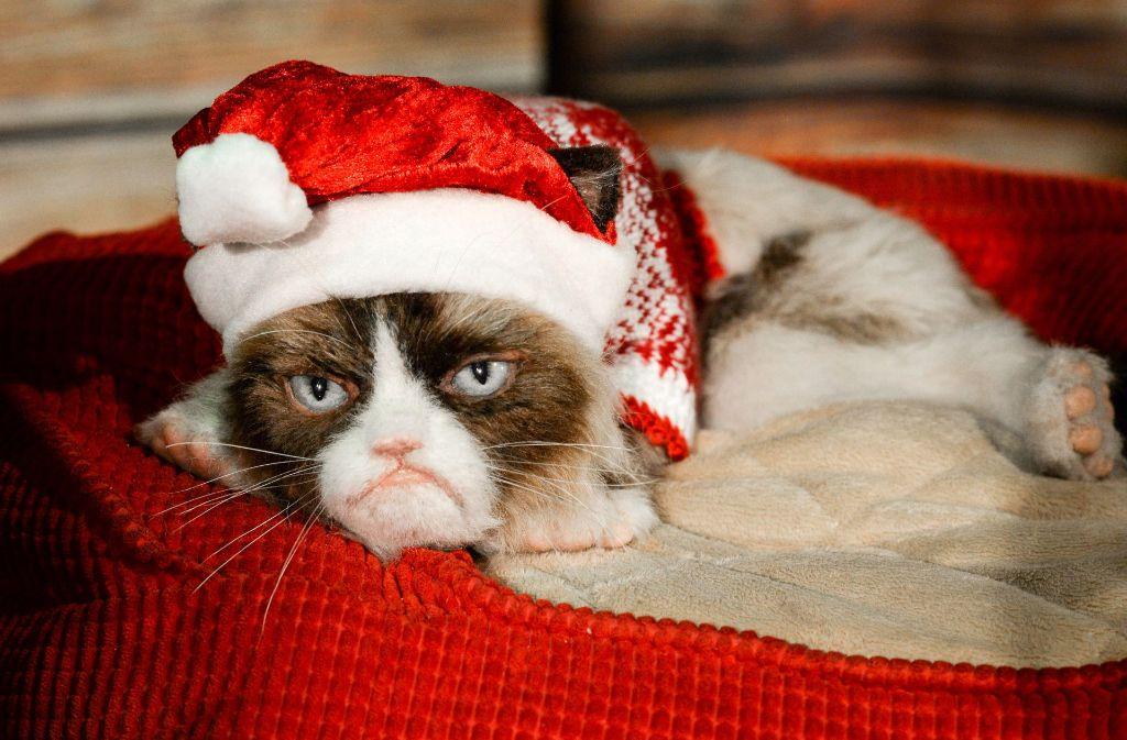 Kann man es mit Weihnachtsn übertreiben? Diese Katze sagt ja. Foto: dpa