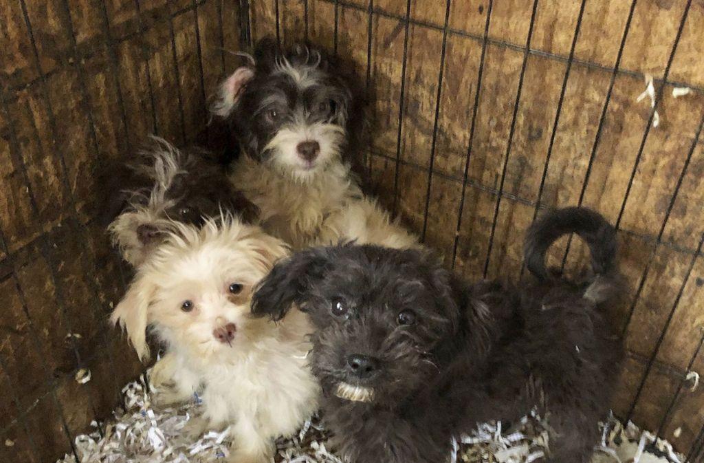 Diese Hunde aus einem Heim in Burlington County konnten gerettet werden. Bei der Inspektion eines Hauses im US-Staat New Jersey hat die Polizei 44 tote Hunde in Plastiktüten verpackt in Gefriertruhen entdeckt. Foto: Monmouth County SPCA