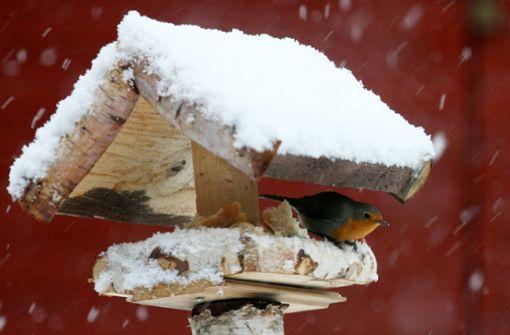 Warum sind so wenige Wintervögel in unseren Gärten?