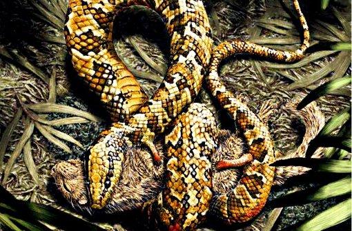 Schlange mit vier Beinen entdeckt