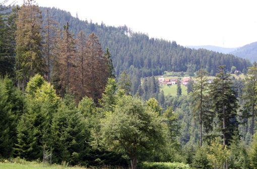 Untersteller optimistisch für die Zukunft des Waldes