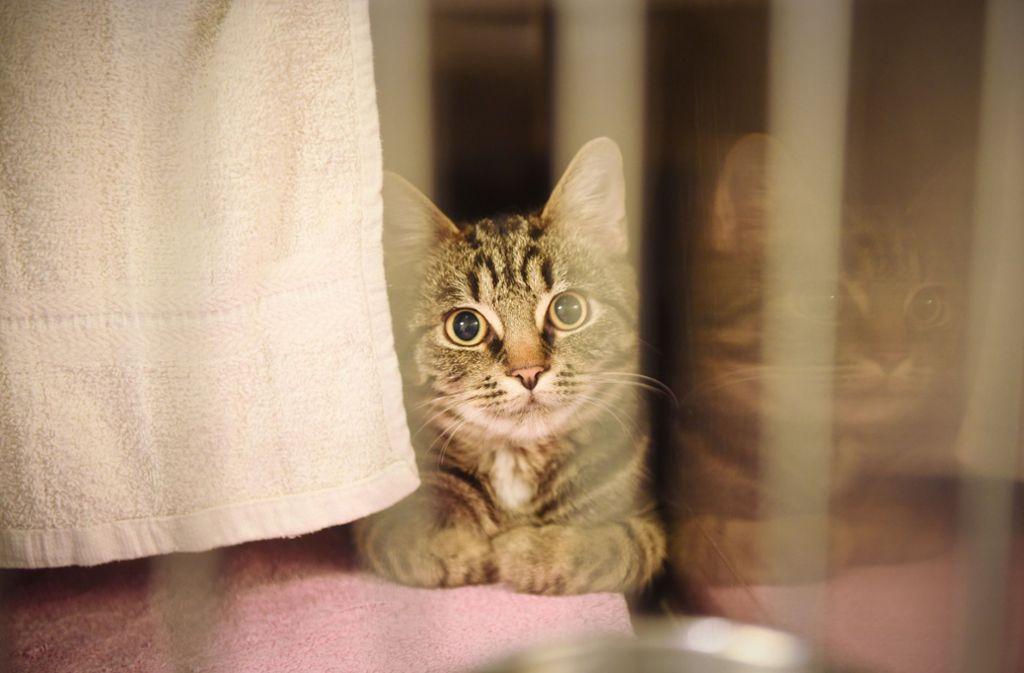 Eine junge Katze konntet in Ingersheim gerade noch gerettet werden. Foto: dpa