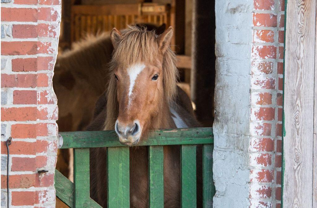 Das Pferd verletzte das Mädchen schwer am Kopf (Symbolbild). Foto: dpa-Zentralbild