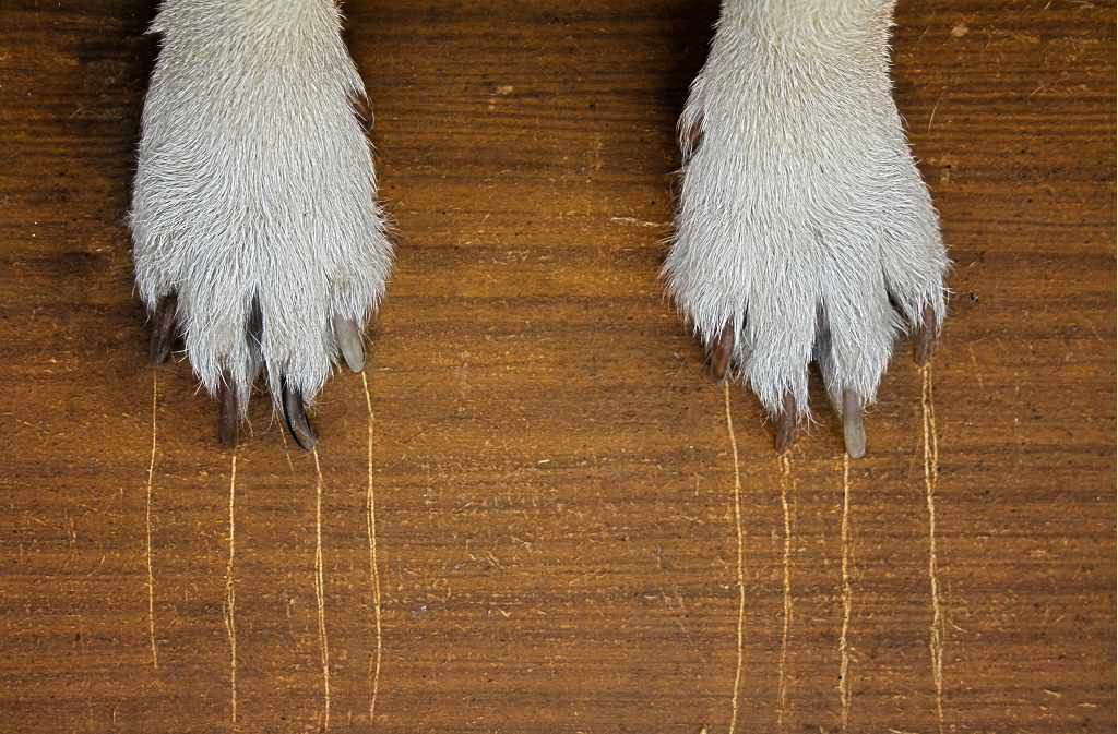 Kratzer im Laminat entfernen Foto: Elena Arkadova/Shutterstock