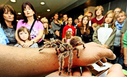 Spinnen, Skorpione und was da sonst so kreucht und fleucht