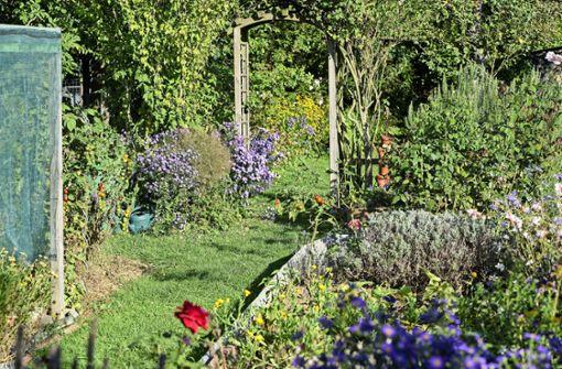Ein Garten wie ein kleiner Zauberwald