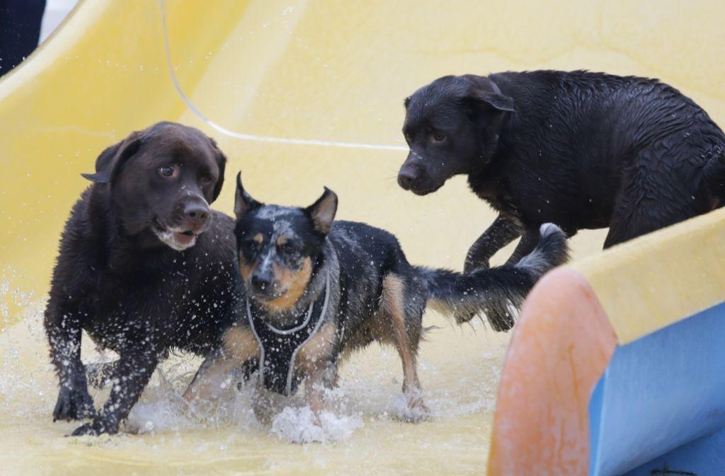 Auch auf der Wasserrutsche haben die Vierbeiner am Sonntag ihren Spaß. Foto: Patricia Sigerist