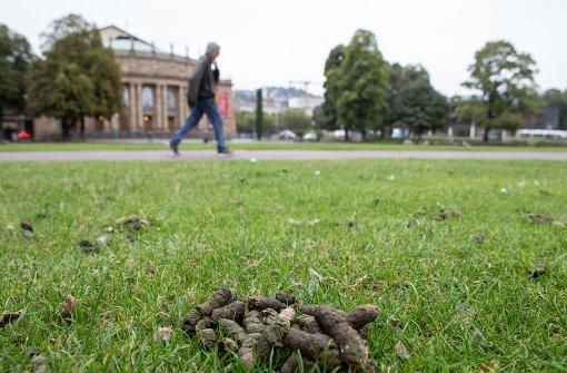 Stadt Stuttgart hat ein Gänsekotproblem