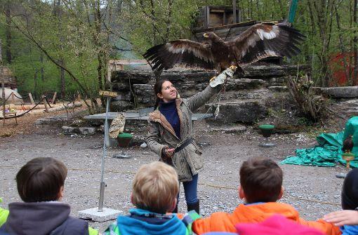 Die Falknerin Vanessa Müller hat den Steppenadler Conan auf dem Arm, der eine Flügelspannweite von fast zwei Metern hat. Foto: Sabrina Höbel