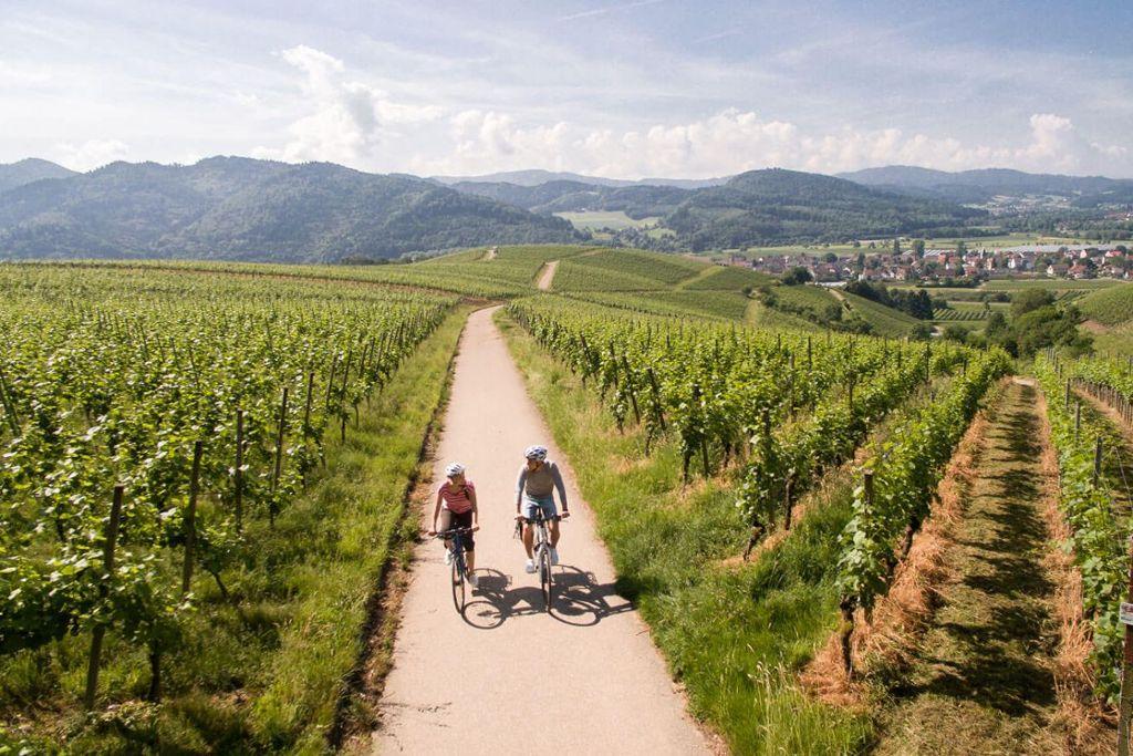 Rebberg bei Buchholz Foto: Chris Keller/ Schwarzwald-Tourismus