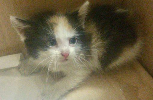 Katzenbaby aus Motorraum gerettet
