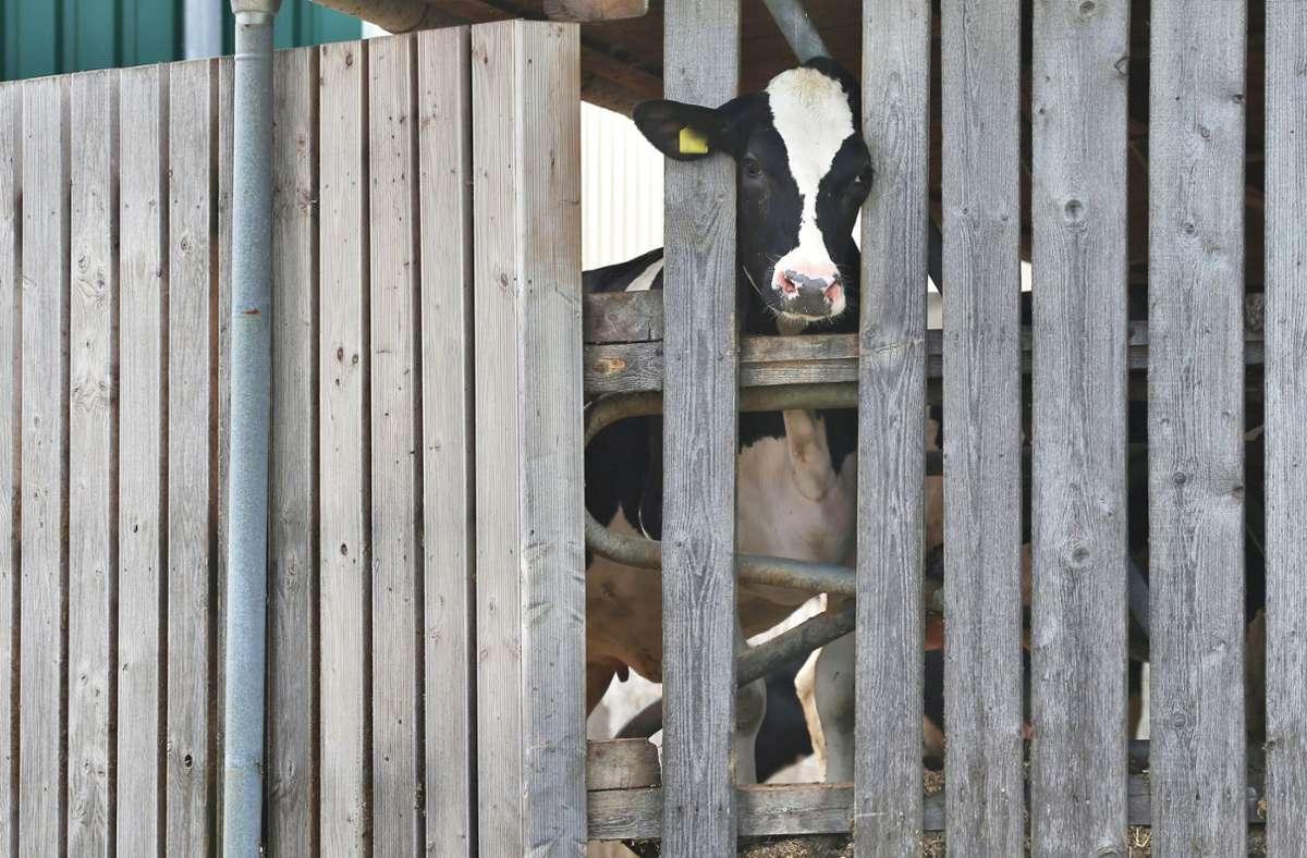Der Betrieb war bereits in der Vergangenheit im Zusammenhang mit dem Allgäuer Tierschutzskandal in den Schlagzeilen (Archivbild). Foto: dpa/Karl-Josef Hildenbrand