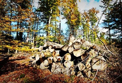 Im Forst hält Marktwirtschaft Einzug