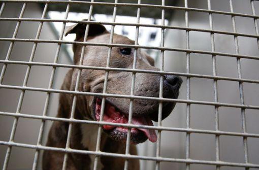 Mutmaßliche Hundehändler vorläufig festgenommen