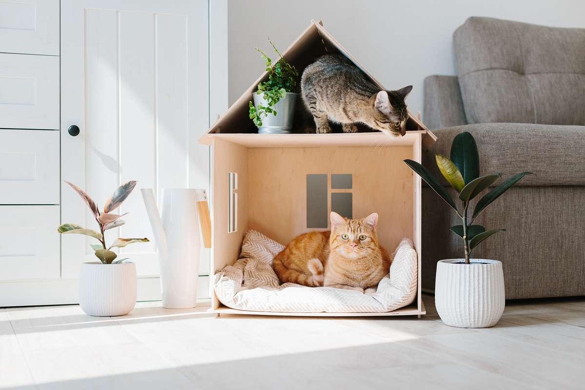 Was gibt es zu beachten, wenn man mit Katzen umzieht? Foto: Switlana Sonyashna/Shutterstock