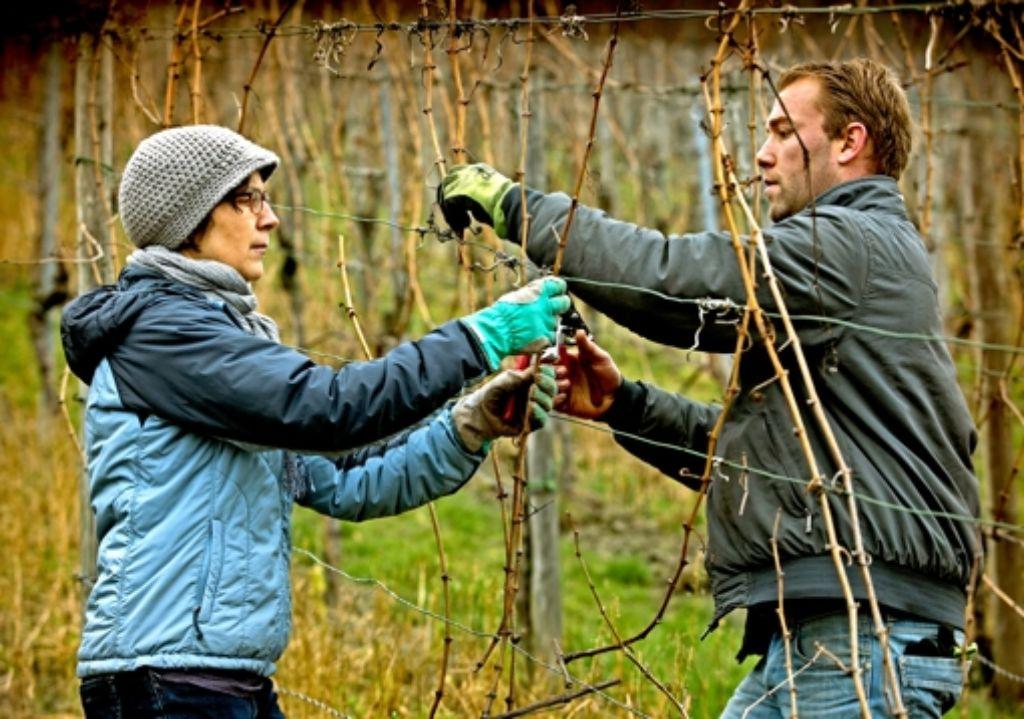 Susanne Stephan hilft ihrem Patenwengerter Leon Gold beim Rebschnitt Foto: Frank Eppler
