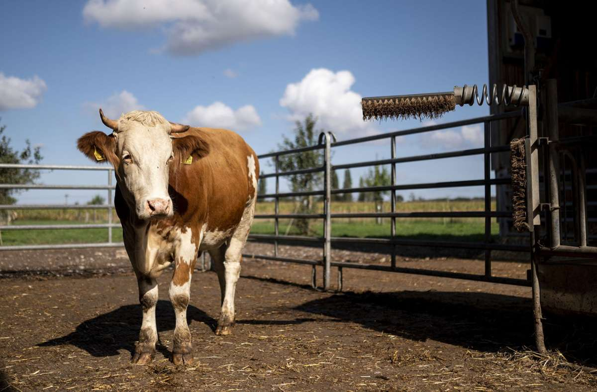 Im Jahr 2020 wird knapp ein Zehntel der landwirtschaftlichen Fläche in Deutschland ökologisch bewirtschaftet. (Archivbild) Foto: dpa/Marius Becker