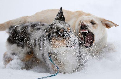 Streusalz aus Schinkenfabrik lässt Hunde ausflippen