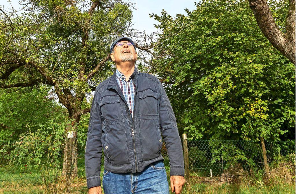 Der   Obstbaumexperte Walter Hartmann hat ein waches Auge auf die zunehmende Verbreitung der Misteln auf den Bäumen der  Streuobstwiesen. Foto: Thomas Krämer