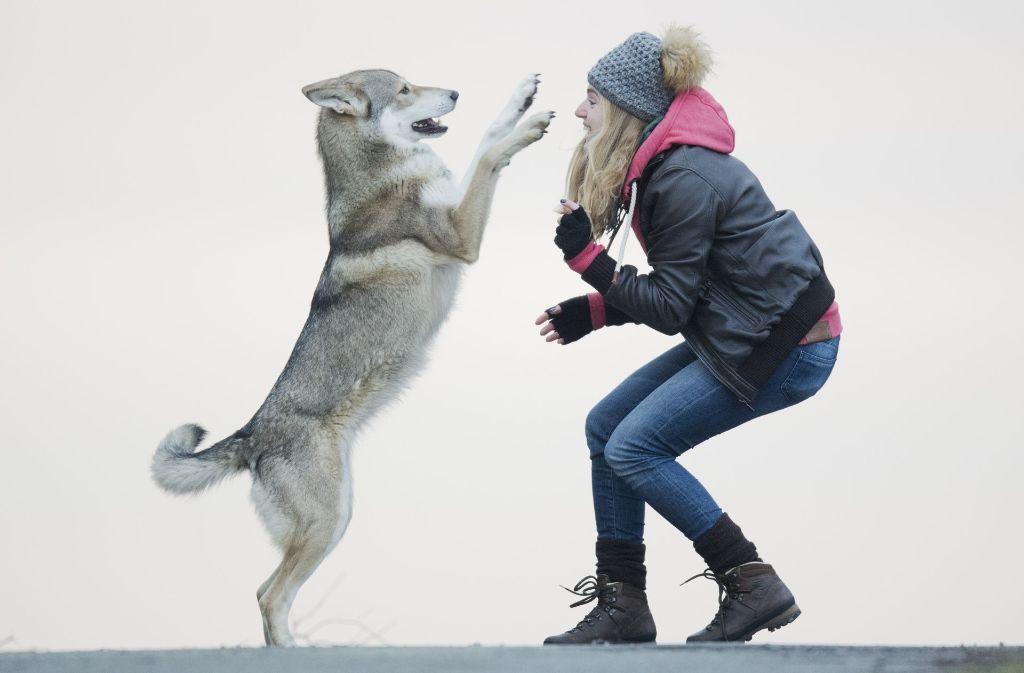 Hunde bewerten nicht nur einzelne Wörter, sondern auch den Tonfall eines Sprechenden. Foto: dpa