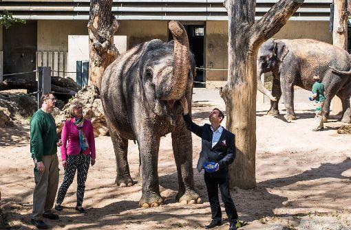 Wilhelma will Elefanten und Tiger züchten
