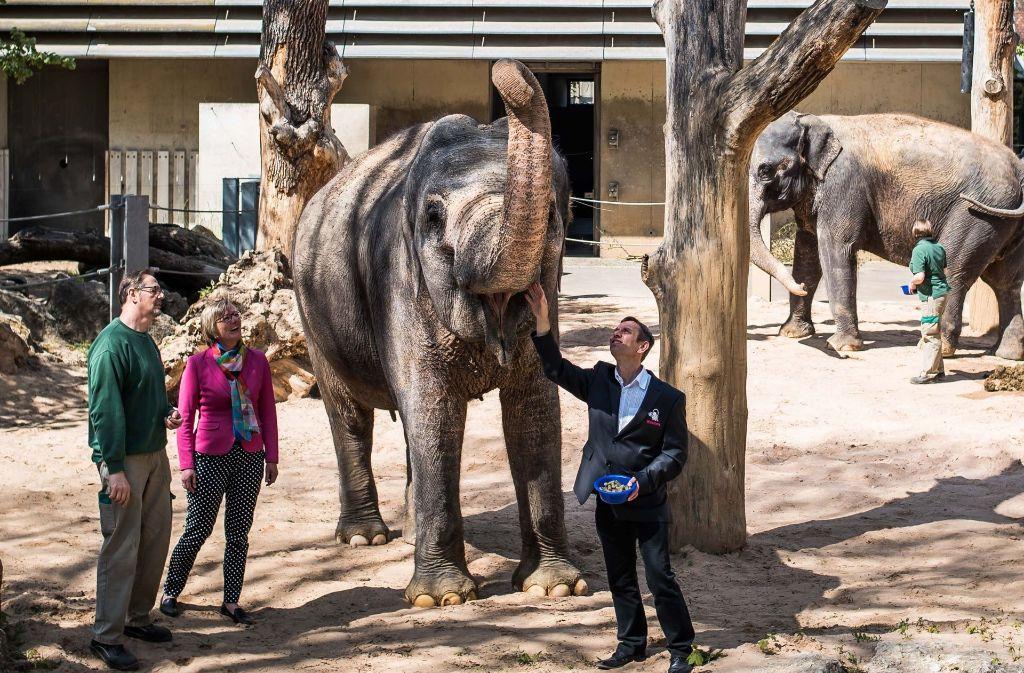 Wilhelmachef Thomas Kölpin und Finanzministerin Edith Sitzmann im Kontakt mit einer betagten Elefantendame. Foto: Lichtgut/Max Kovalenko