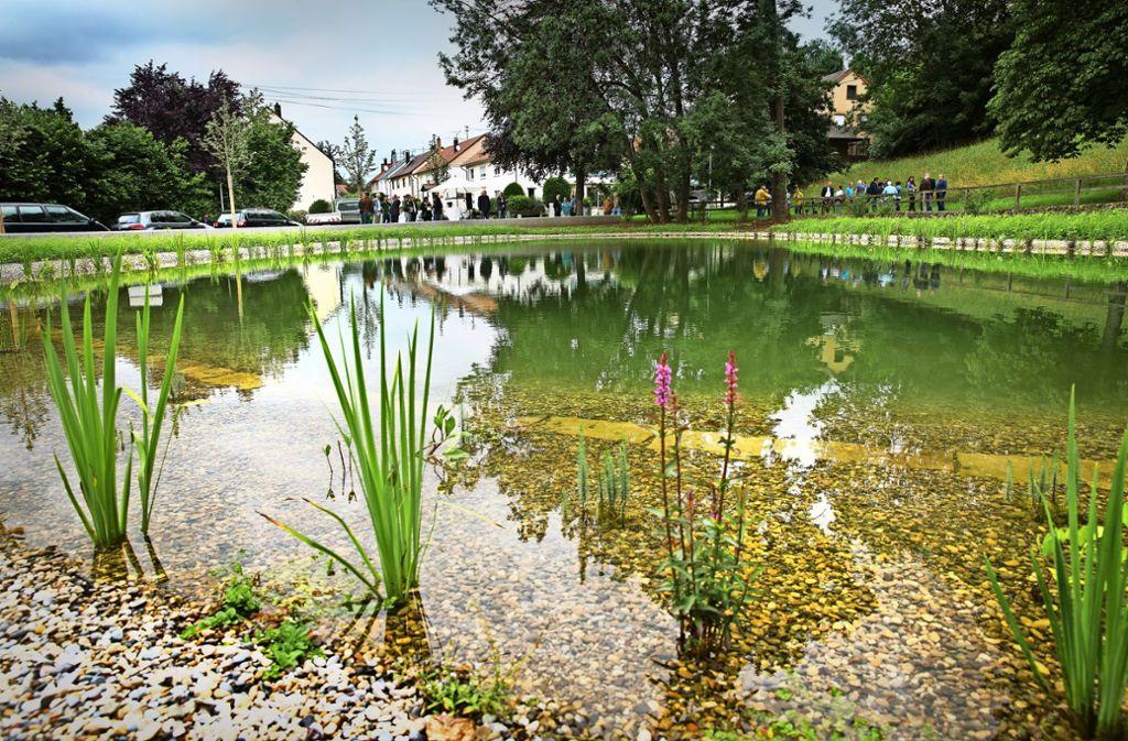 Am Rand des Sees werden  seltene Teichblumen angepflanzt. Foto: Ines Rudel