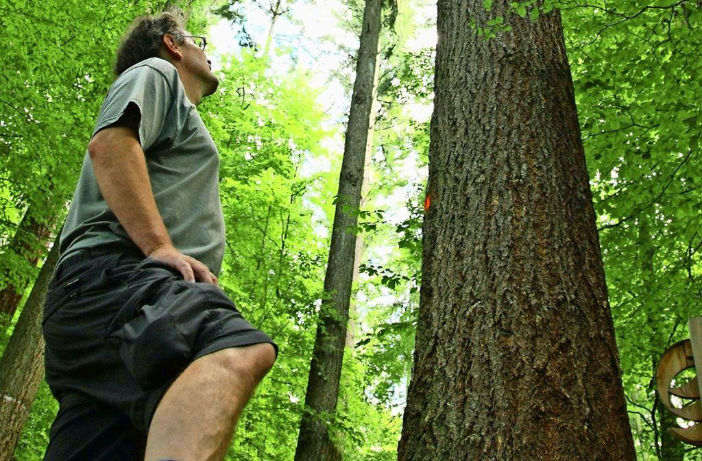 Seit 26 Jahren gibt es den Verein  Prima Klima. Er will Wälder erhalten. Foto: dpa