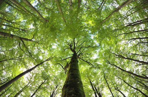 Den Bäumen im Wald geht die Kraft aus