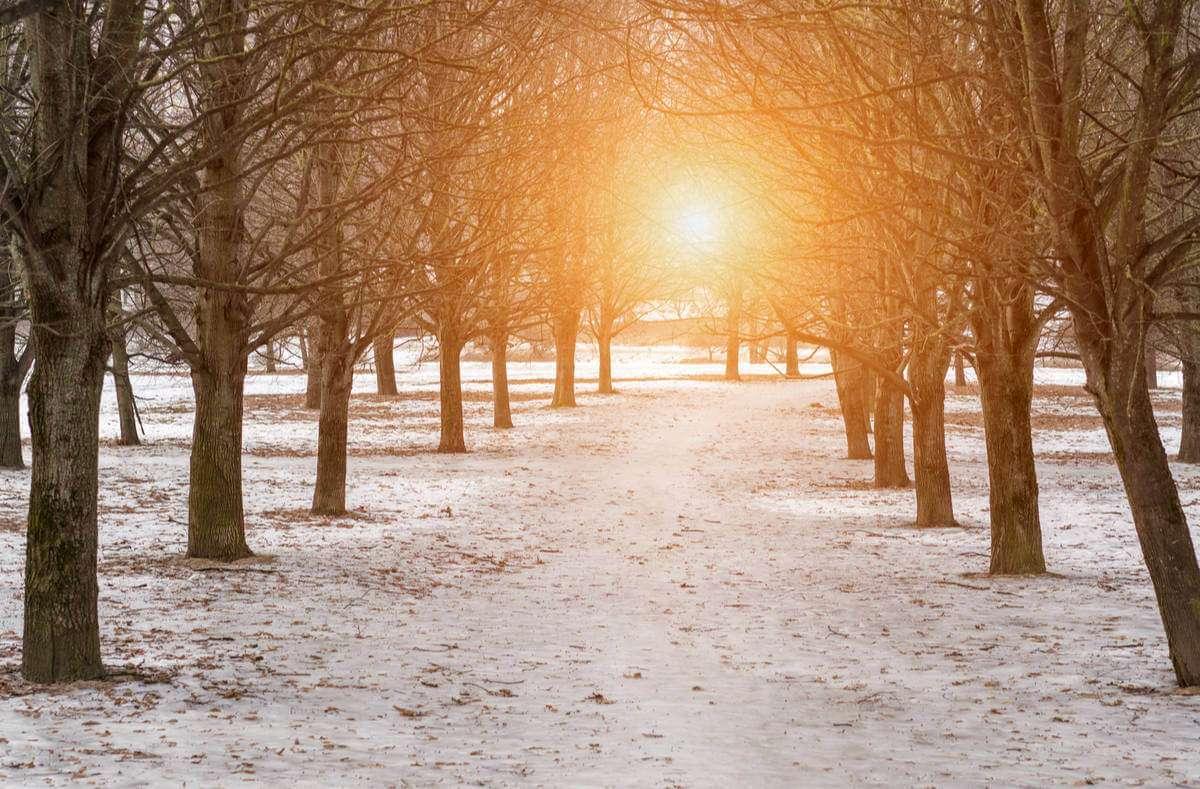 Ab dem 21.12. werden die Tage wieder länger und heller. Hier finden Sie die wichtigsten Infos zur Wintersonnenwende. Foto: Bonsales / Shutterstock.com