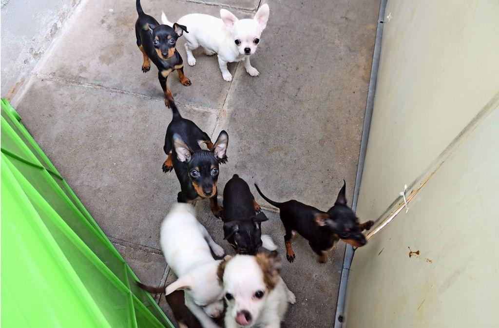 Im Stuttgarter Tierheim wartet eine bunte Mischung an Hunderassen auf neue Frauchen und Herrchen. Vom Chihuahua bis zum Labrador ist fast alles dabei. Foto: Tierheim Stuttgart (z)
