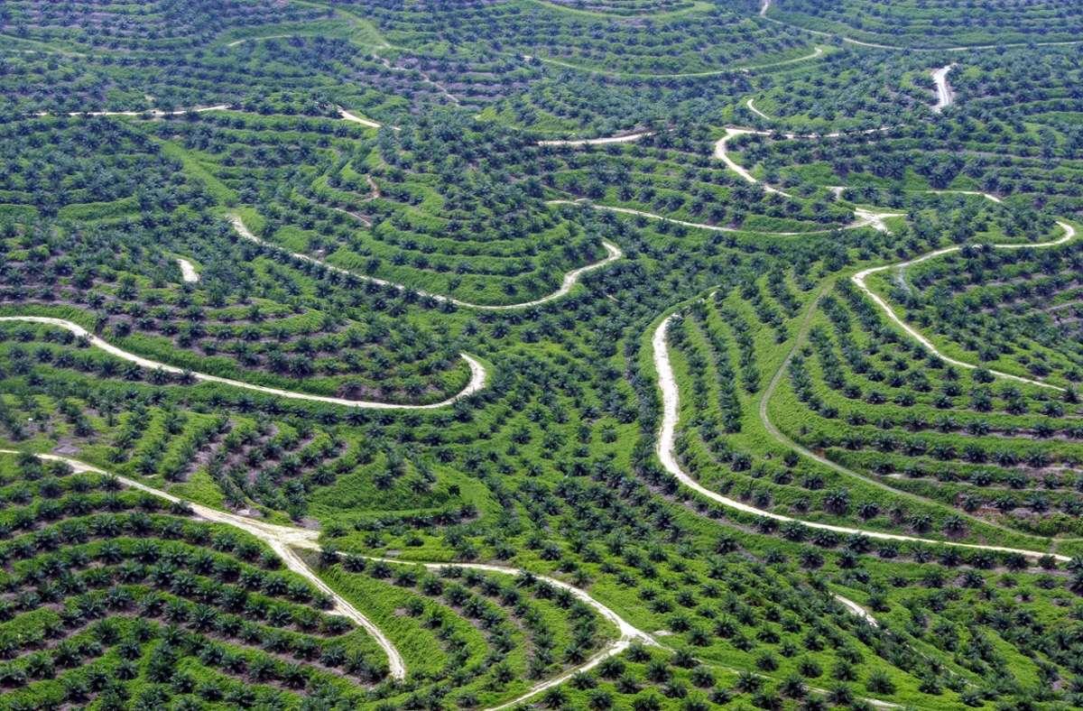 Jährlich werden nach Behördenangaben rund 200000 Tonnen Palmöl nach Sri Lanka importiert, hauptsächlich aus Indonesien und Malaysia. Foto: dpa/Bagus Indahono