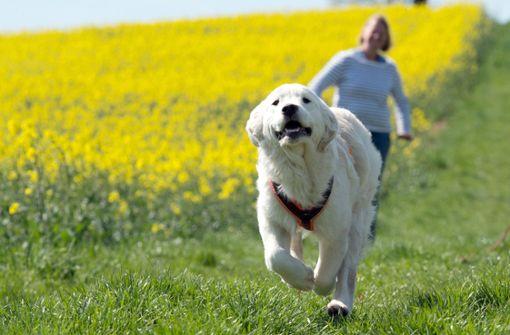 Gen-Datenbank zeigt Wirkung gegen Hundekot