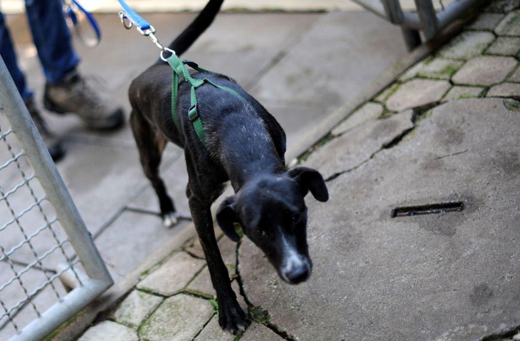 Beim Gassigehen mit dem Hund (Symbolfoto)  ist derzeit Vorsicht geboten. Foto: dpa
