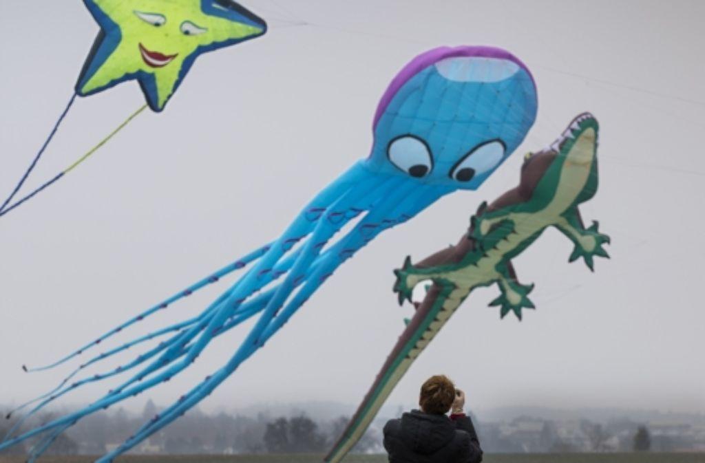 Klotzen statt kleckern: der Tintenfisch etwa  bringt es auf 27 Meter Länge Foto: Eppler